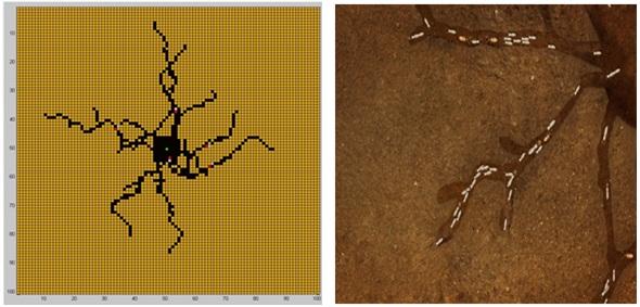 Study of Individual-based Ecosystem Models image
